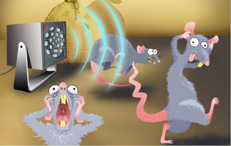 Как ультразвук влияет на грызунов
