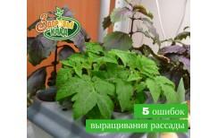 5 Ошибок выращивания рассады из семян в домашних условиях