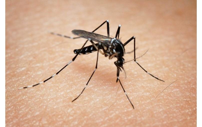 """""""Последний писк"""": Как работают инсектицидные лампы и ловушки уничтожители насекомых"""