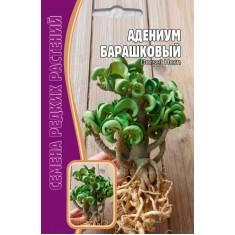 Адениум Барашковый