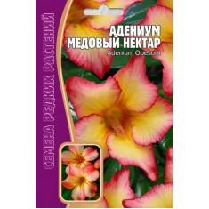 Адениум пестролистный, сорт Медовый нектар