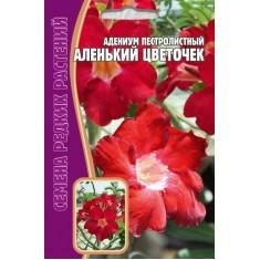 Адениум пестролистный, сорт Аленький цветочек