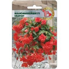 Бегония ампельная Иллюминейшн F1 Скарлет, 8 семян