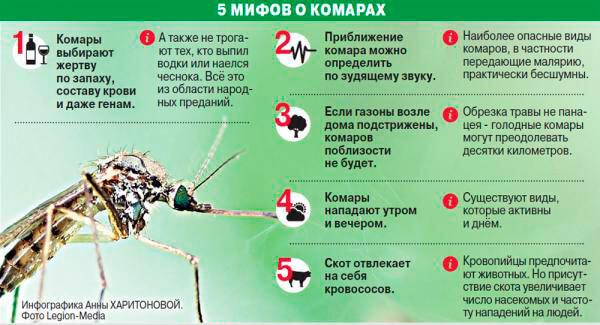 Чем опасны комары?